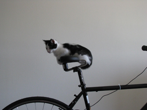 Cat on Spiderflex Bike Saddle